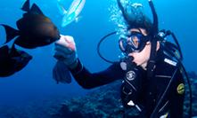 신비의 푸른 동굴 체험 다이빙