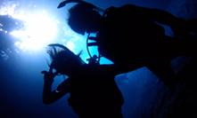 산호초의 바다 체험 다이빙