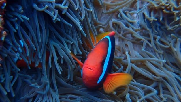 산호초의 바다 스노클링